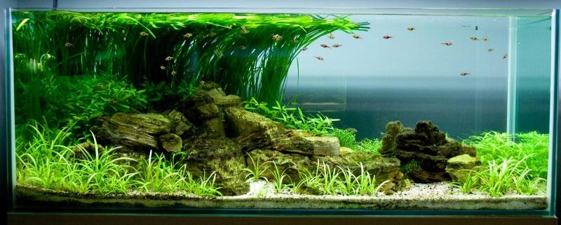 Як підібрати акваріумних риб?