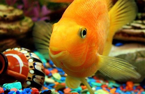 Як вибрати рибку?