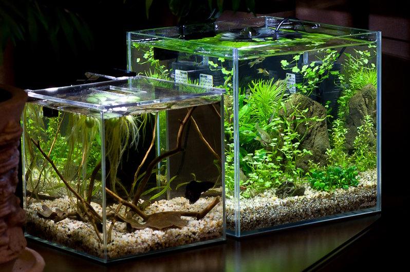 Нано (акваріум з нано-рибками)