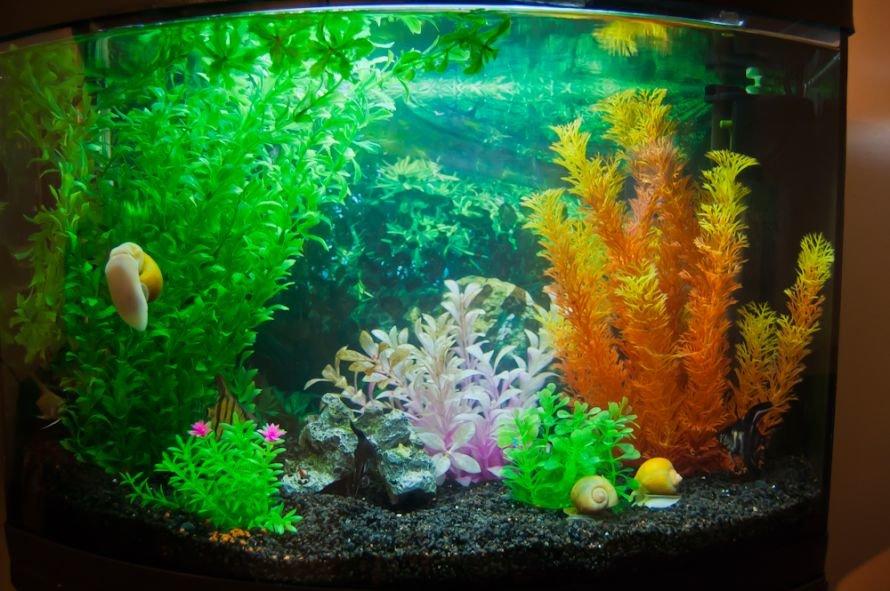 Універсальний акваріум