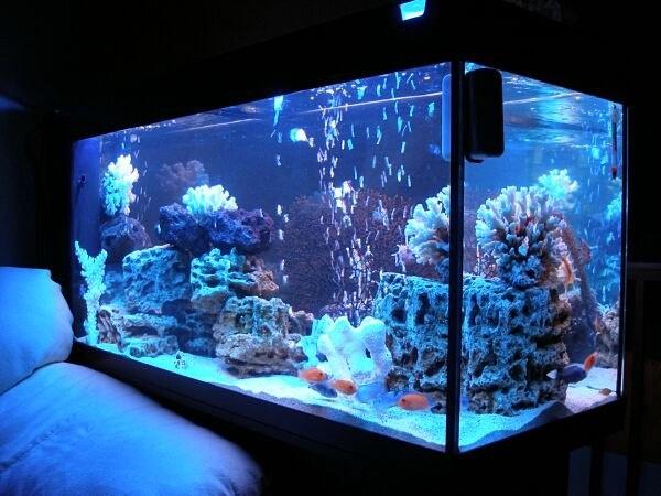 Як доглядати за акваріумом?