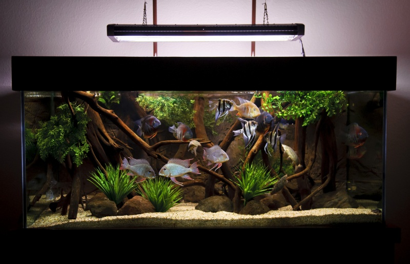 Скільки коштують акваріумні рибки?