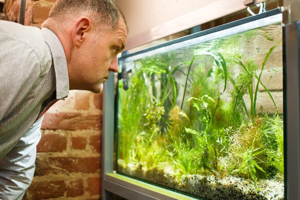 Чому в акваріумі поганий запах і як його прибрати?
