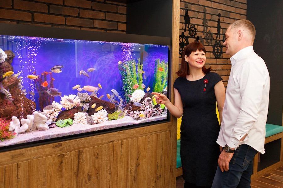 Як правильно запустити рибок в діючий акваріум? Читайте в статті!